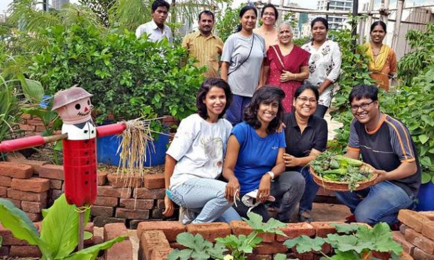 This startup can help you grow organic food on your terrace and in gardens.