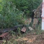 Zoho CEO Sridhar Vembu Has 'Auspicious' Encounter with a Massive 12-Foot King Cobra