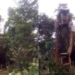 Video Shows Crane Picking Up Massive Snake in Rain Forest, Netizens Call It 'World's Biggest Snake'