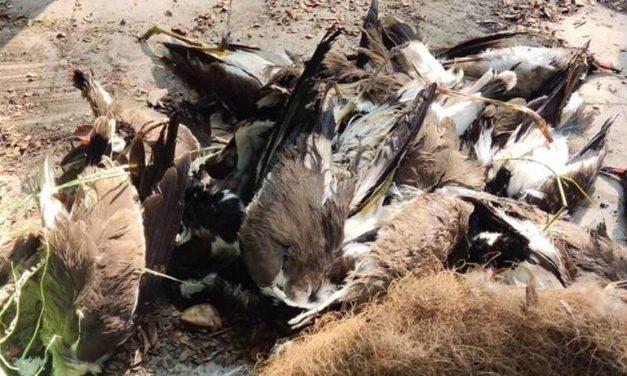 Bird flu outbreak in Kerala, Karnataka issues High Alert