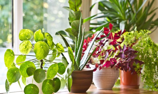 5 Healthy Plants That Are Easy To Grow in your House. #GoGreen