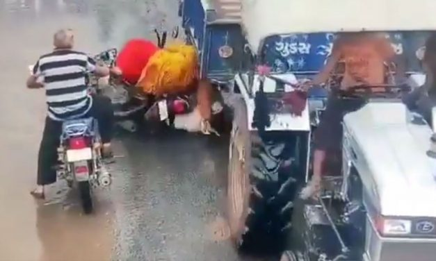 Caught in Cam: Helmet Miraculously Saves Life as Trolly Wheel Goes Over Man's Head