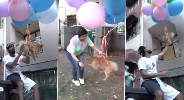 Delhi-based YouTuber ties pet dog with balloons to make it 'fly', Arrested for animal cruelty