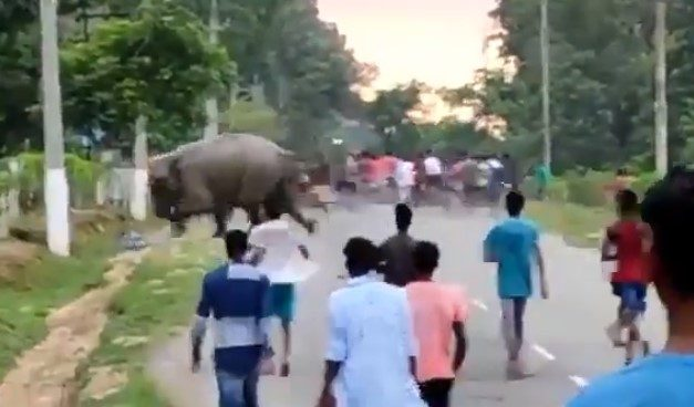 Video Captures Elephant Trampling Man to Death in Assam after Crowds Agitate It