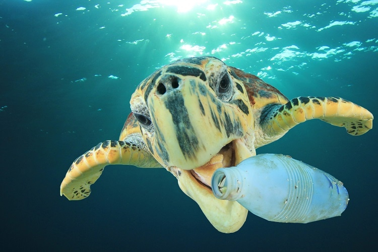 Heart Breaking Facts About The Marine Life. Please Stop Pollution.