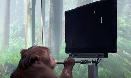 Elon Musk releases footage of monkey playing pong after being implanted with Neuralink