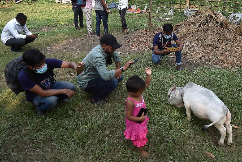 People-taking-pictures-of-Dwarf-Cow