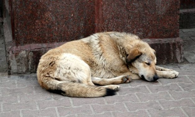 Ujjain: 5 Street Dogs Brutally Killed by Acid Attack, Case Filed Against Unidentified Accused