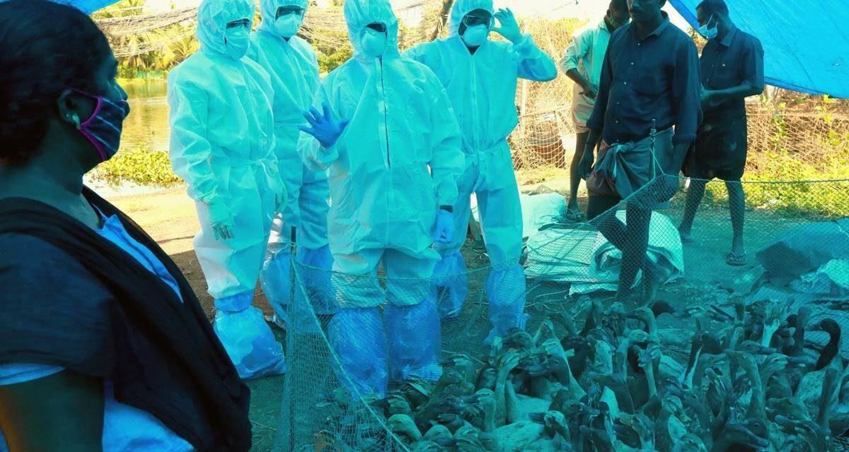 Bird flu outbreak in Delhi and Maharashtra
