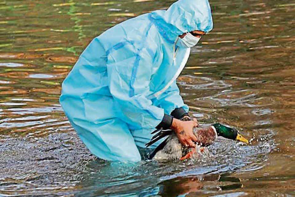 Maharashtra and Jammu & Kashmir issue Bird flu alert