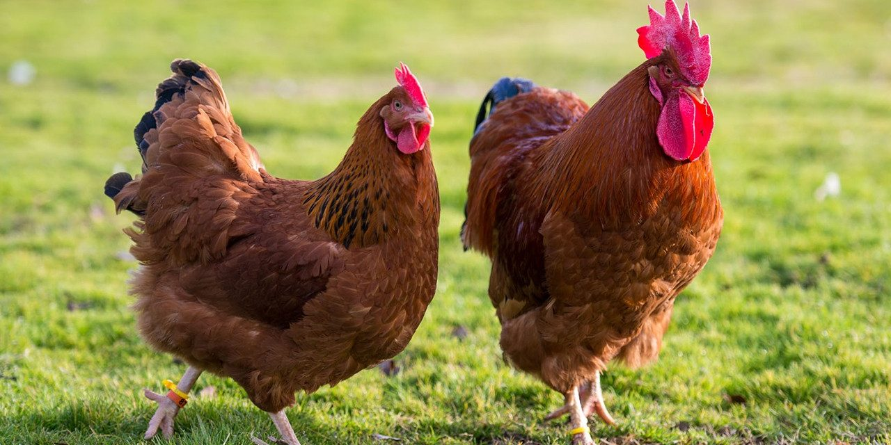 China makes it official on the first Human case of H1ON3 Bird Flu