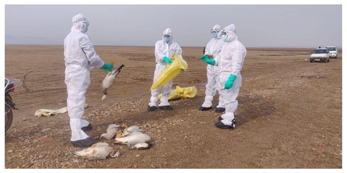 Himachal Pradesh: 1,700 birds found dead in Pong Dam sanctuary; state issued bird flu alert