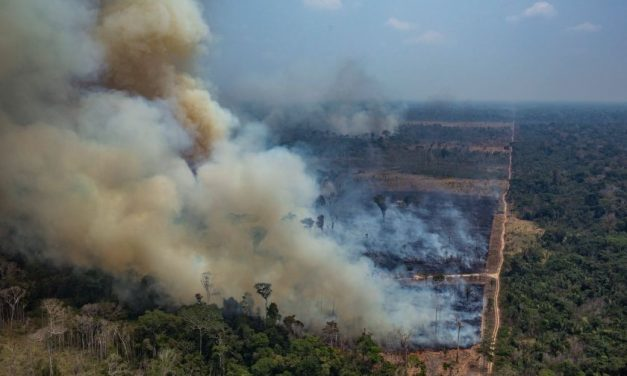 What would happen if we lost Amazon Rainforest to the Brazilian Forest Fire? It is severe than you think.