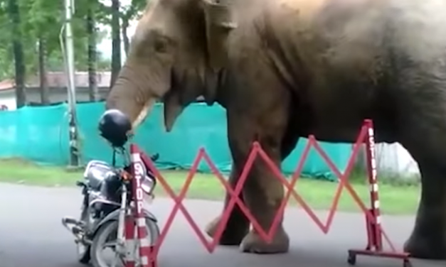 Trending Viral Videos: Elephant eats helmet, on the other hand Police officers in trouble for filming a video