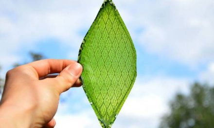 IISc Scholars Make Artificial Leaf That Produces Fuel and Releases Oxygen Through Fake Photosynthesis