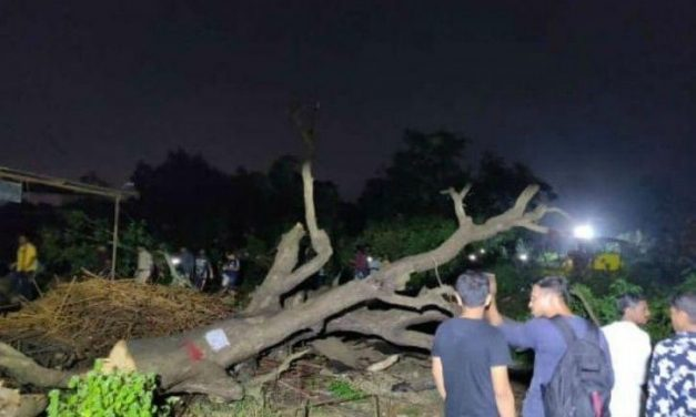 Supreme Court Orders BMC To Stop Cutting Down Aarey Forest & Release Arrested Protestors