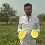 Karnataka farmer grows yellow watermelons; Earns profit of Rs. 1 lakh by sale