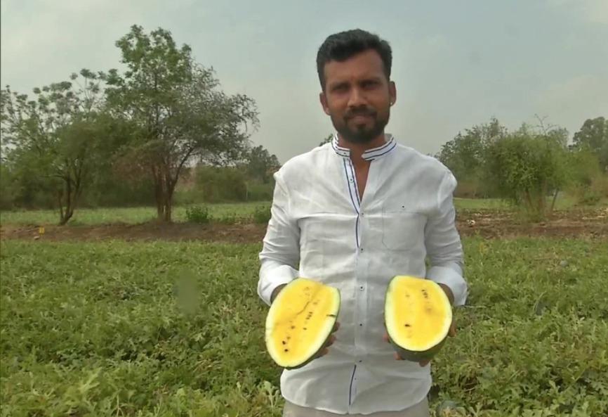 Karnataka farmer grows yellow watermelons; Earns profit of Rs. 1 lakh by sale